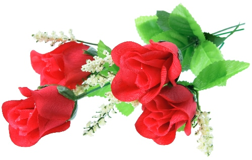 Roses on isolated background.