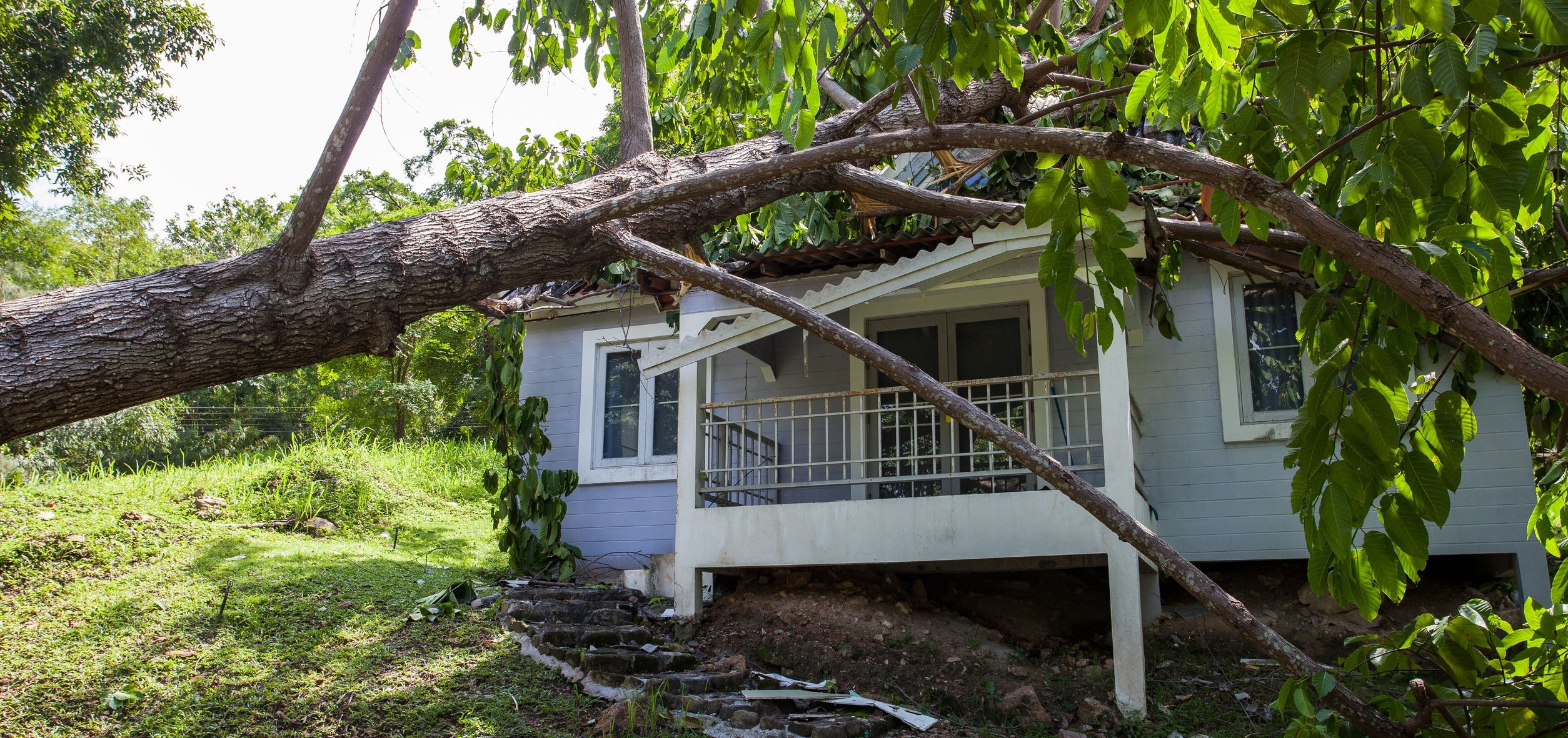 Fallen tree after hard storm on a damaged house