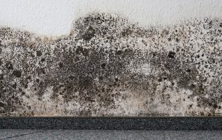 Mold on wall of a home