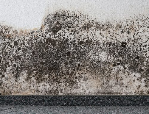 Water Damages and Mold Growth Prevention Tips For Your Property!
